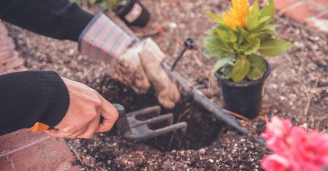 5 Safety Tips for Gardeners image